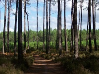 GR655 Walking from  Beliet (Gironde) to Onesse-Laharie (Landes)