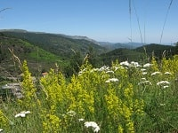 5 GR7 Hiking from La Bastide-Puylaurent (Lozere) to L'Esperou (Gard)
